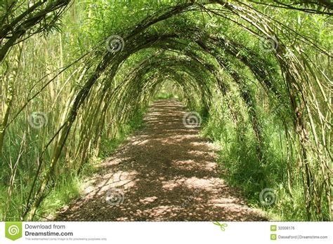 Willow Tree Arches