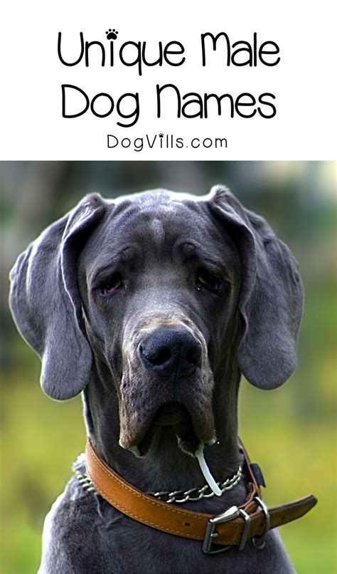 6 Incredibly Unique Male Dog Names You'll Love - DogVills