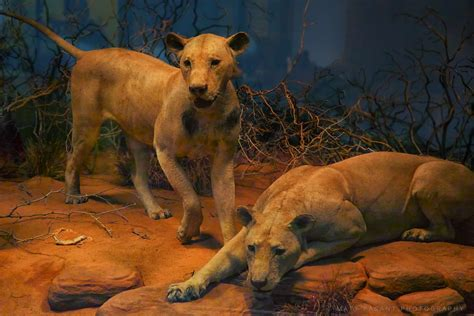 The Ghost and the Darkness - The Man-eating Lions of Tsavo
